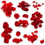 Set of rose petals Stock Photos