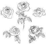 Set Rose sketch. Royalty Free Stock Photos