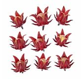 Set of roselle hibiscus on white background royalty free stock photo
