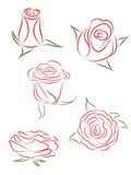 Set of roses. The set of five buds of roses Royalty Free Stock Images