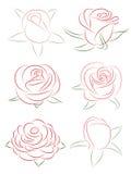 Set of roses Stock Photos