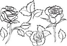 Set of roses Stock Photography