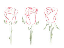 Set of roses. Stock Photography