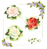 Set of roses. Stock Image