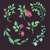 Set of roses and branches on a maroon background Stock Images