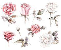 set of roses cliparts Stock Photo