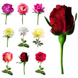 Set of 9 roses Royalty Free Stock Photo