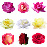 Set of 9 roses Royalty Free Stock Image