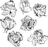 Set of roses Royalty Free Stock Photography