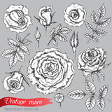 Set of roses  and leaves. Hand drawn vector illustration in graphic vintage style Stock Photo