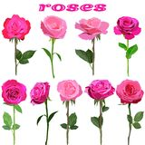 Set of roses on stems isolated on white background vector illustration