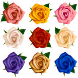 Set of roses of various colors Royalty Free Stock Photography