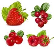 Set rote Beeren mit Blättern. Stockfotografie
