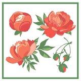 Set rote Rosen Sammlung rote Blumen Auch im corel abgehobenen Betrag Stockfoto