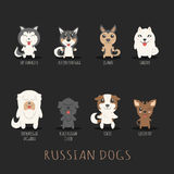 Set of russian dogs Royalty Free Stock Photography