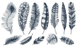 Set of Rustic realistic feathers of different birds, owls, peacocks, ducks. engraved hand drawn in old vintage sketch stock illustration