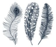 Set of Rustic realistic feathers of different birds, owls, peacocks, ducks. engraved hand drawn in old vintage sketch royalty free illustration