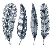 Set of Rustic realistic feathers of different birds, owls, peacocks, ducks. engraved hand drawn in old vintage sketch vector illustration