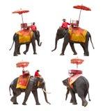 Set słoń dla turystów jedzie wycieczkę turysyczną antyczny miasto w Th Fotografia Royalty Free
