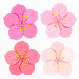 Set of Sakura is flower. vector illustration Stock Images