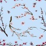Set of sakura japan cherry pattern Stock Photos