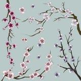 Set of sakura japan cherry Royalty Free Stock Image