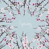 Set of sakura japan cherry Royalty Free Stock Images
