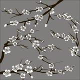 Set of sakura japan cherry Stock Image