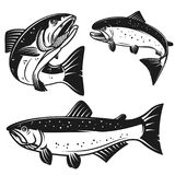 Set of salmon fish icons isolated on white background. Design element for poster, logo, label, emblem, sign, t shirt. Vector illustration Royalty Free Stock Photo