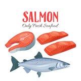 Set salmon vector illustration. royalty free illustration
