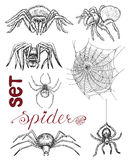 Set with scary spiders and cobweb Royalty Free Stock Photo
