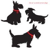 Set schottische Terrierhunde Stockbild