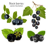 Set schwarze Beeren mit Blättern. Stockbilder