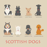 Set of scottish dogs Royalty Free Stock Photography