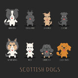 Set of scottish dogs Stock Photos
