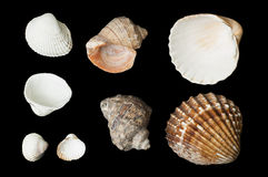 Set of sea ​​shells black isolated Royalty Free Stock Photo
