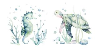 Set of sea animals. Blue watercolor ocean fish, turtle, sea horse whale and coral. Shell aquarium background. Nautical