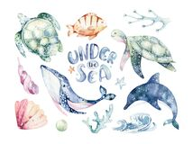 Set of sea animals. Blue watercolor ocean fish, turtle, whale and coral. Shell aquarium background. Nautical wildlife