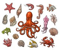 Set sea animals. Shell, coral, crab, shrimp, star, fish ,octopus. Set sea animals. Shell, cuttlefish, coral, oyster, crab, shrimp, seaweed, star, fish and Stock Image