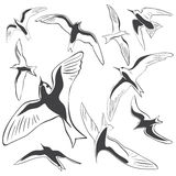Set of Sea Birds. Set vector images of Sea Birds Royalty Free Illustration