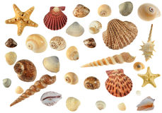 Set of sea cockleshells Royalty Free Stock Photography