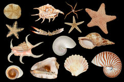 Set of sea cockleshells Stock Photos