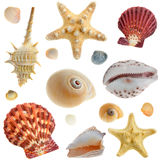Set of sea cockleshells Royalty Free Stock Image