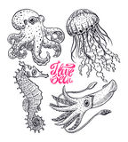 Set of sea creatures. Cute set of sea creatures. Octopus, jellyfish, squid and seahorse. hand-drawn illustration Royalty Free Stock Image