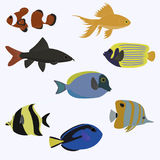 Set of sea fish color design flat. Ocean animal, nature cartoon wildlife aquarium Royalty Free Stock Images