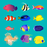 Set of Sea Fish Color Design Flat Royalty Free Stock Photography