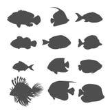 Set of Sea Fish Color Design Flat. Ocean fish animal, nature cartoon wildlife aquarium, underwater life sea fish, exotic drawing marine fauna sea fish vector Royalty Free Stock Image