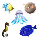 Set sea fish Stock Photos