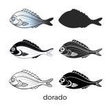 Set of sea fish on white background. Dorado. Vector shape. royalty free illustration