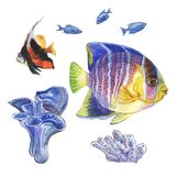 Set of sea fishes and corals, the watercolor drawing on a white background.